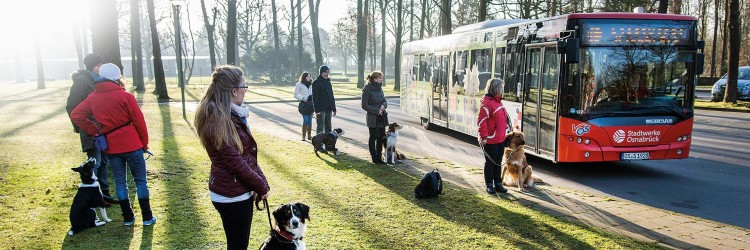 Bus Hundetraining